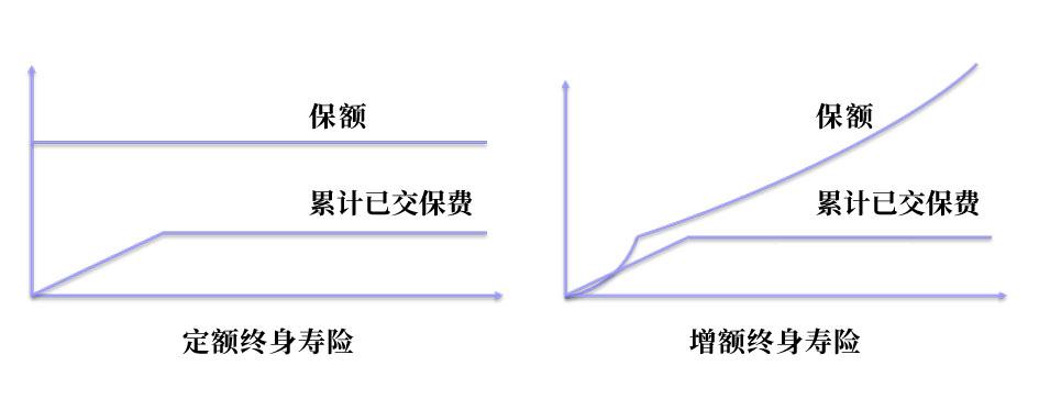 定额增额对比.jpg